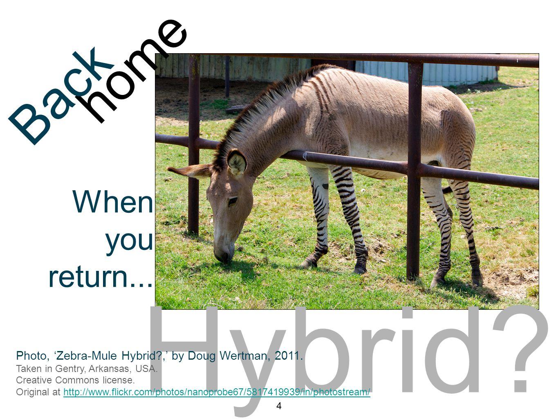 Hybrid. 4 home Back When you return... Photo, 'Zebra-Mule Hybrid?,' by Doug Wertman, 2011.