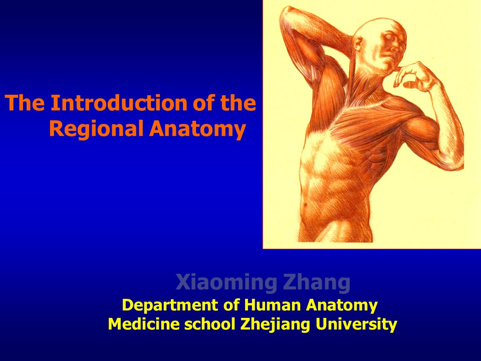 The Introduction of the Regional Anatomy Xiaoming Zhang Department of Human Anatomy Medicine school Zhejiang University