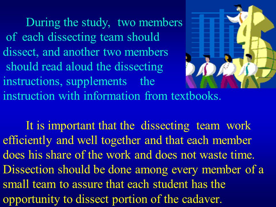 During the study, two members of each dissecting team should dissect, and another two members should read aloud the dissecting instructions, supplemen