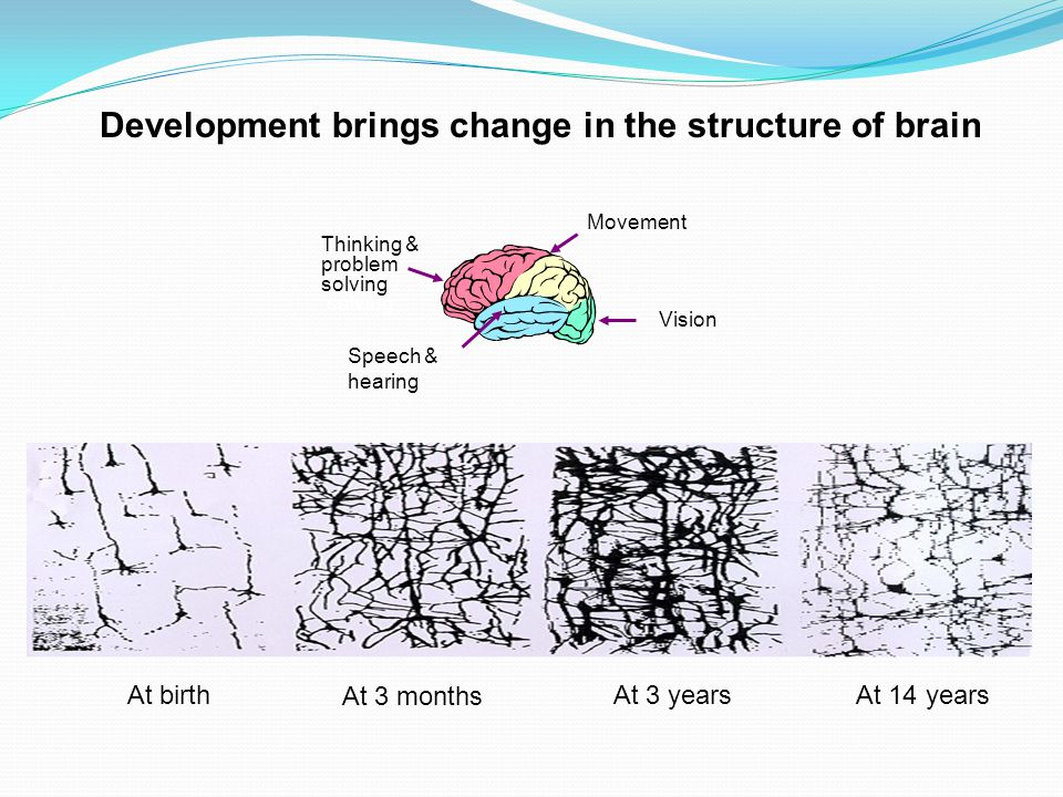 At birth At 3 months At 3 yearsAt 14 years Development brings change in the structure of brain Speech & hearing Movement Thinking & problem solving Vi
