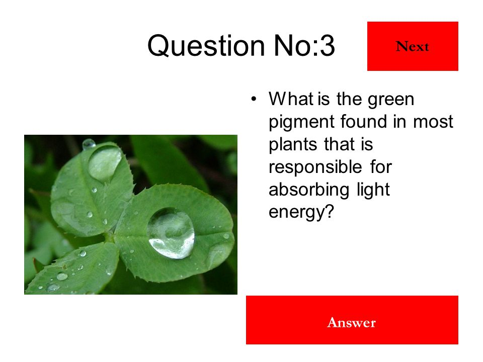 Chlorophyll Answer Question No:3 What is the green pigment found in most plants that is responsible for absorbing light energy? Next