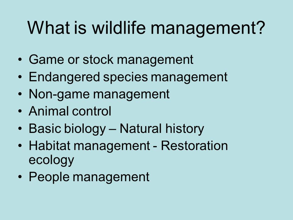 What is wildlife management.