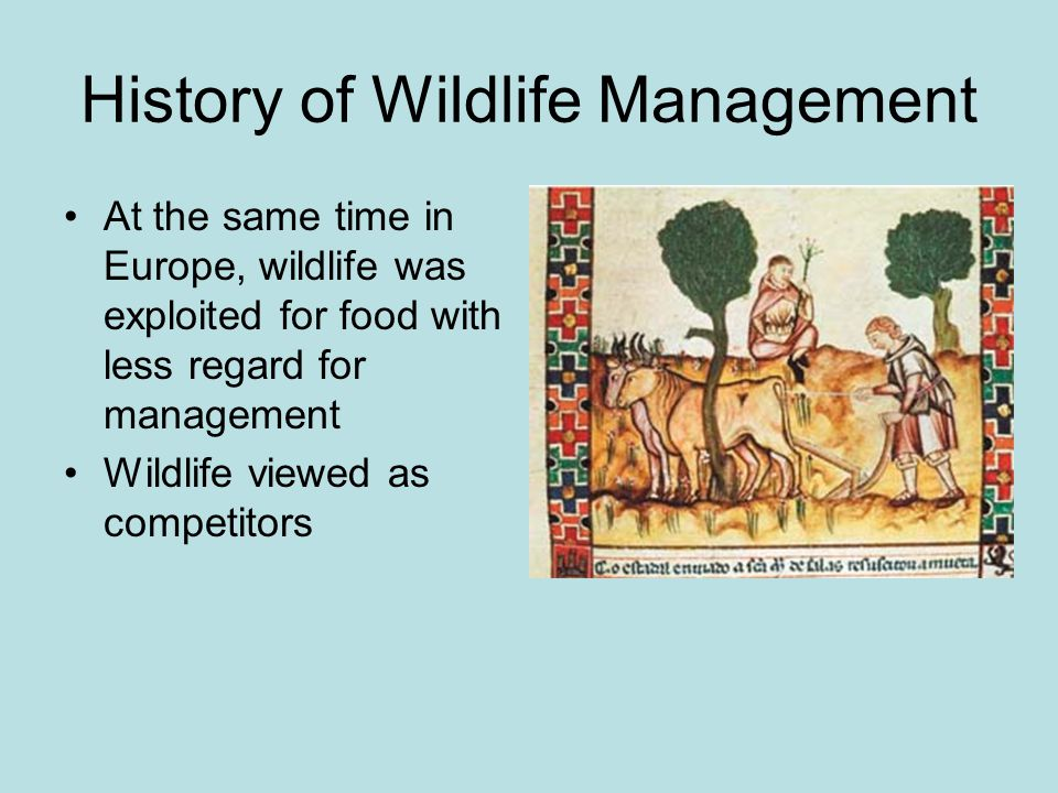 History of Wildlife Management At the same time in Europe, wildlife was exploited for food with less regard for management Wildlife viewed as competitors