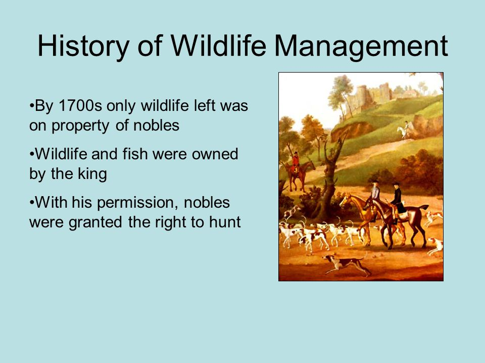 History of Wildlife Management By 1700s only wildlife left was on property of nobles Wildlife and fish were owned by the king With his permission, nob