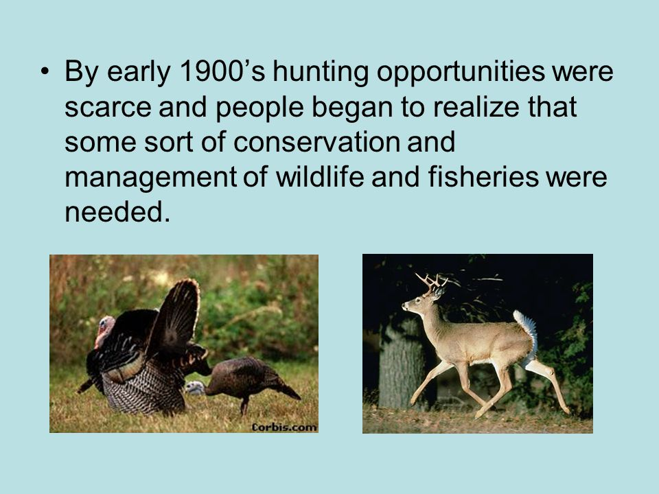 By early 1900's hunting opportunities were scarce and people began to realize that some sort of conservation and management of wildlife and fisheries were needed.