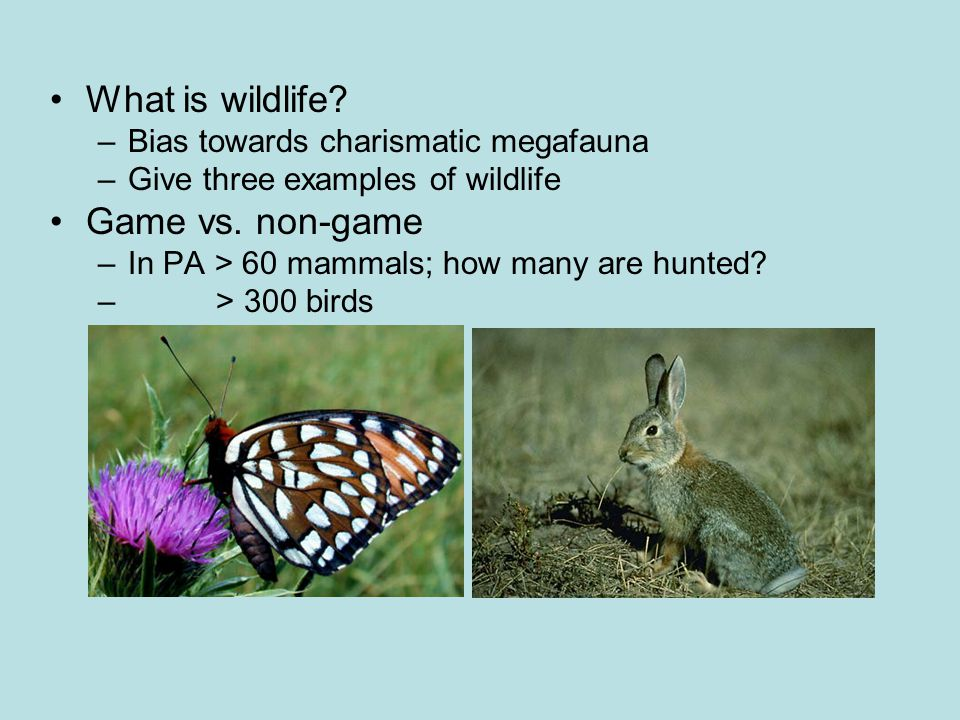 What is wildlife? –Bias towards charismatic megafauna –Give three examples of wildlife Game vs. non-game –In PA > 60 mammals; how many are hunted? – >