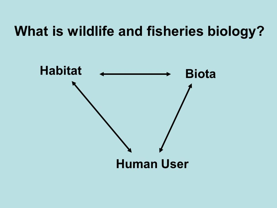 Habitat Biota Human User What is wildlife and fisheries biology?
