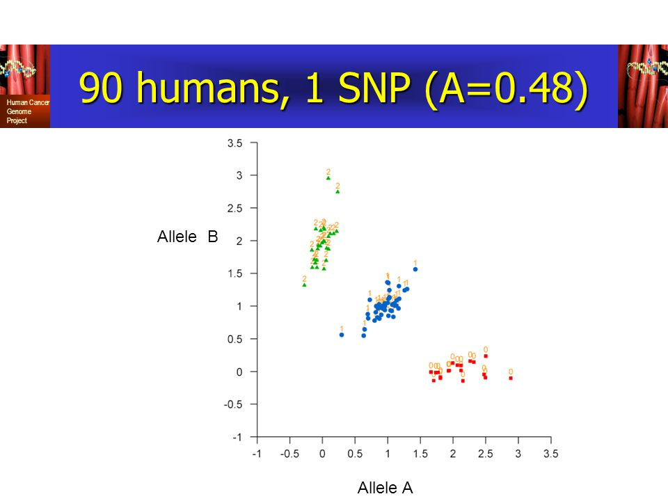 Human Cancer Genome Project 90 humans, 1 SNP (A=0.48) Allele A Allele B