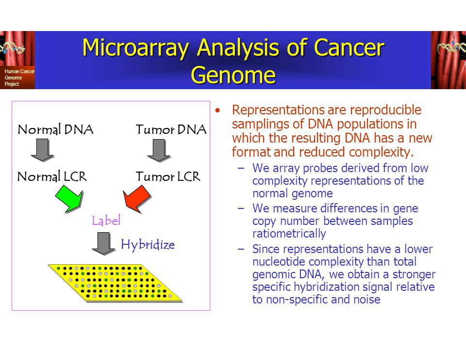 Human Cancer Genome Project Microarray Analysis of Cancer Genome Representations are reproducible samplings of DNA populations in which the resulting DNA has a new format and reduced complexity.