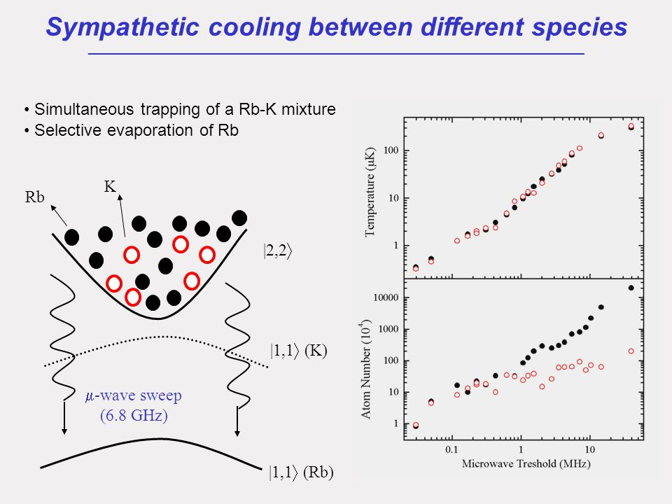 -wave sweep (6.8 GHz) Rb K Simultaneous trapping of a Rb-K mixture Selective evaporation of Rb |2,2  |1,1  (Rb) Sympathetic cooling between different species ___________________________________________________ |1,1  (K)