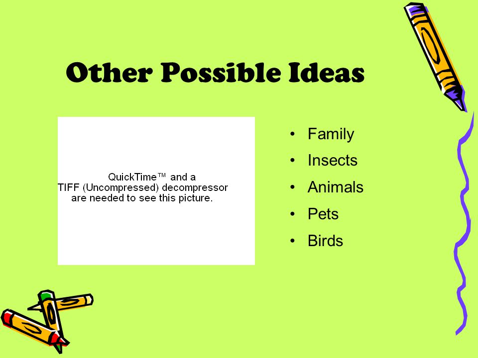 Other Possible Ideas Family Insects Animals Pets Birds