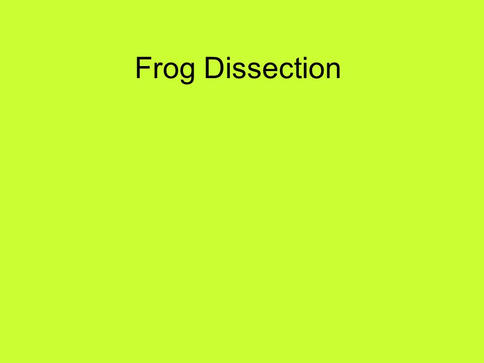 Place Frog in Pan Place him/her in the dissection pan.