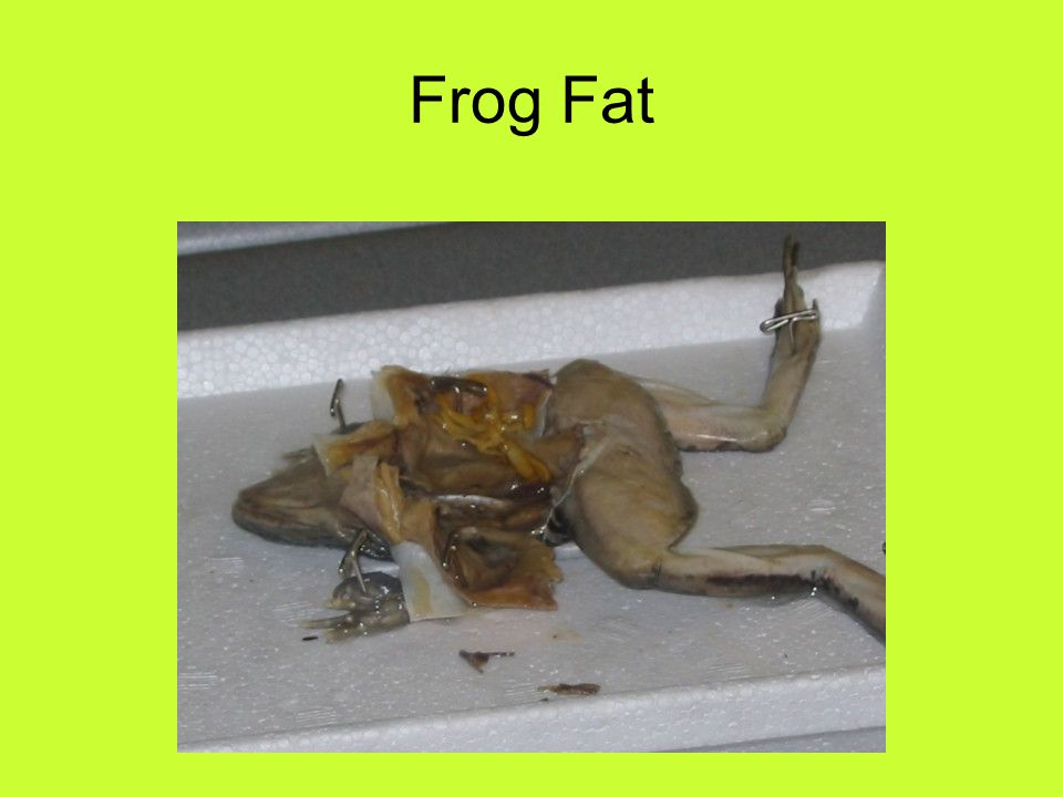 Frog Fat