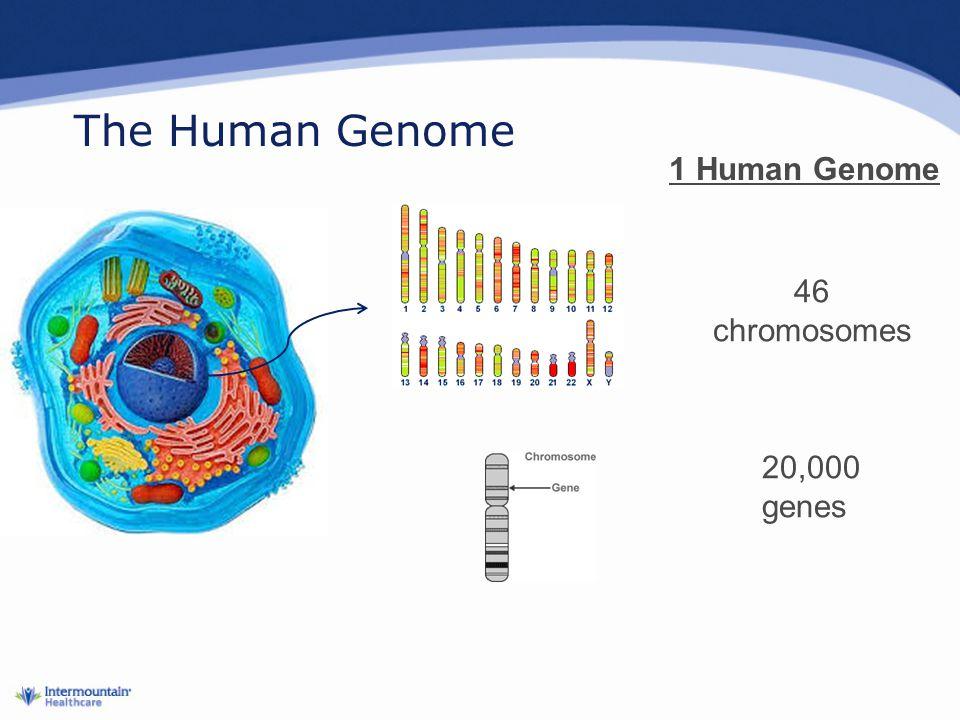 The Human Genome 46 chromosomes 20,000 genes 1 Human Genome