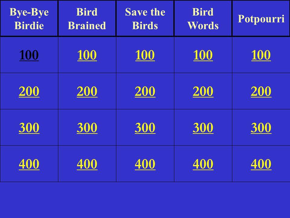 200 300 400 100 200 300 400 100 200 300 400 100 200 300 400 100 200 300 400 100 Bye-Bye Birdie Bird Brained Save the Birds Bird Words Potpourri