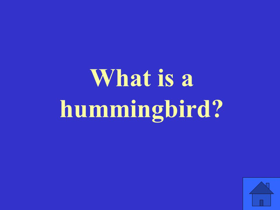What is a hummingbird