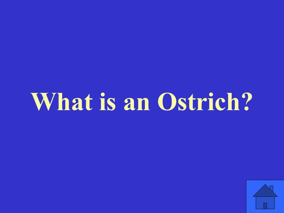 What is an Ostrich