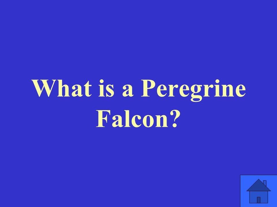 What is a Peregrine Falcon