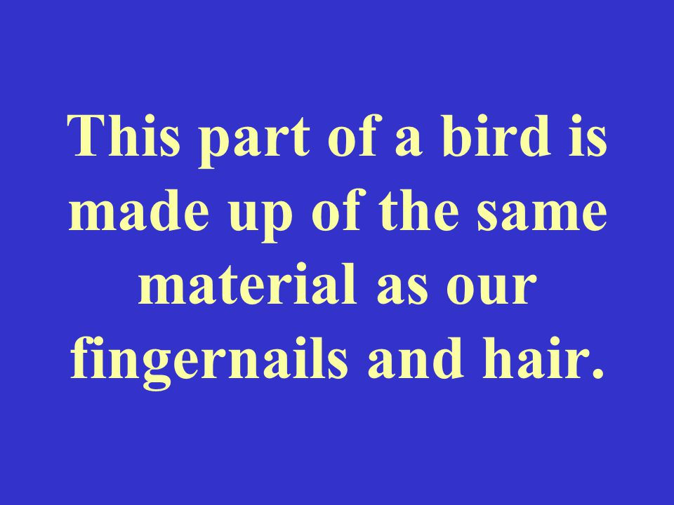 This part of a bird is made up of the same material as our fingernails and hair.
