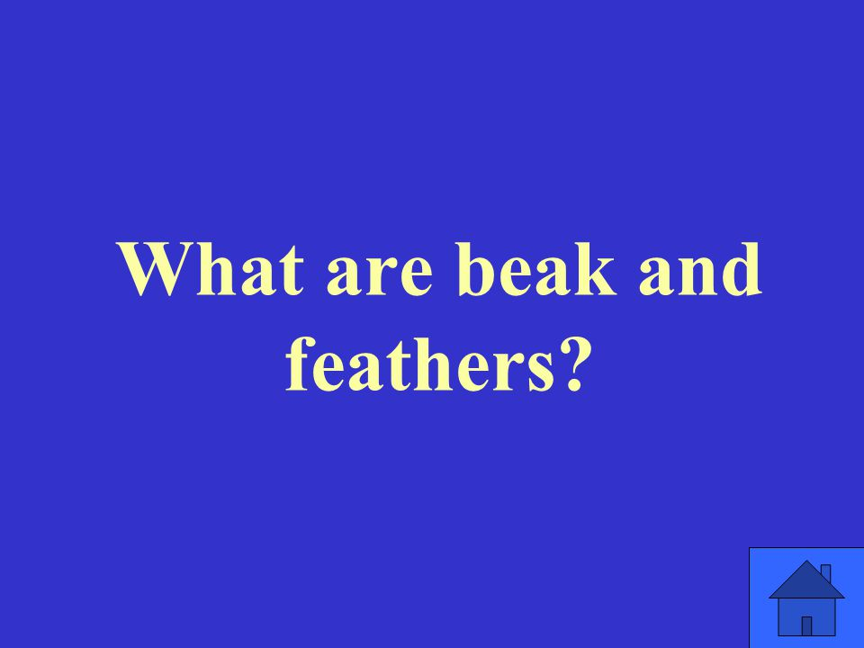 What are beak and feathers