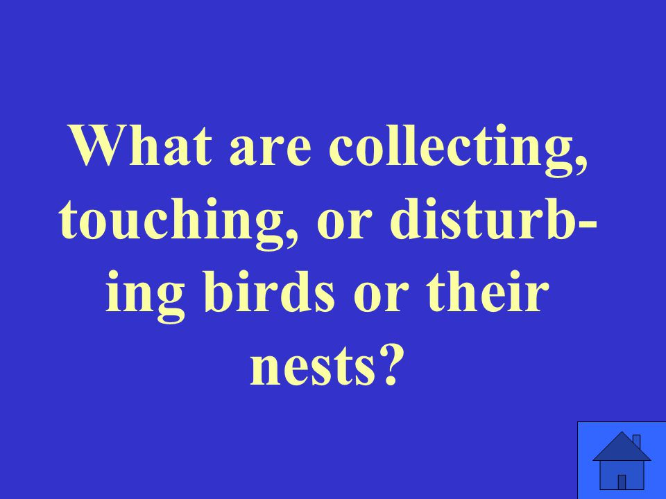 What are collecting, touching, or disturb- ing birds or their nests