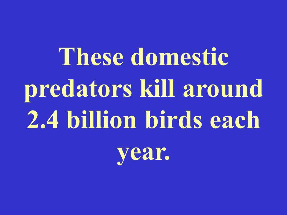 These domestic predators kill around 2.4 billion birds each year.