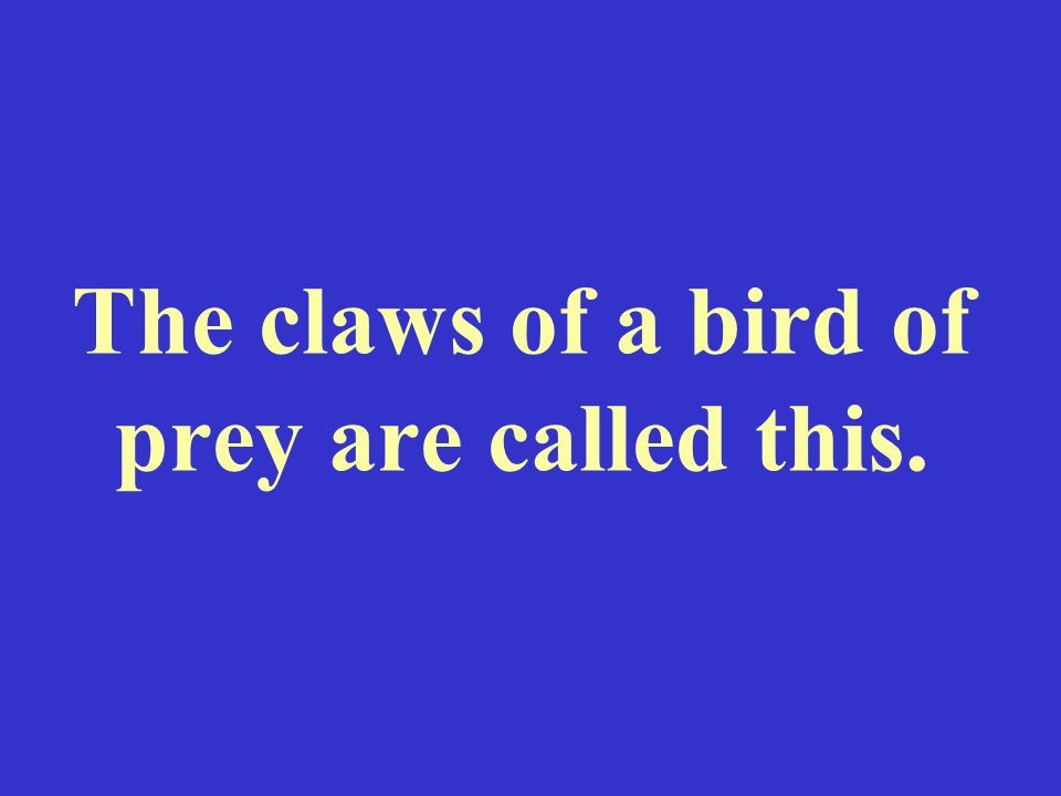 The claws of a bird of prey are called this.