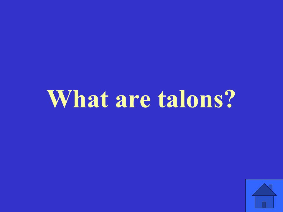 What are talons