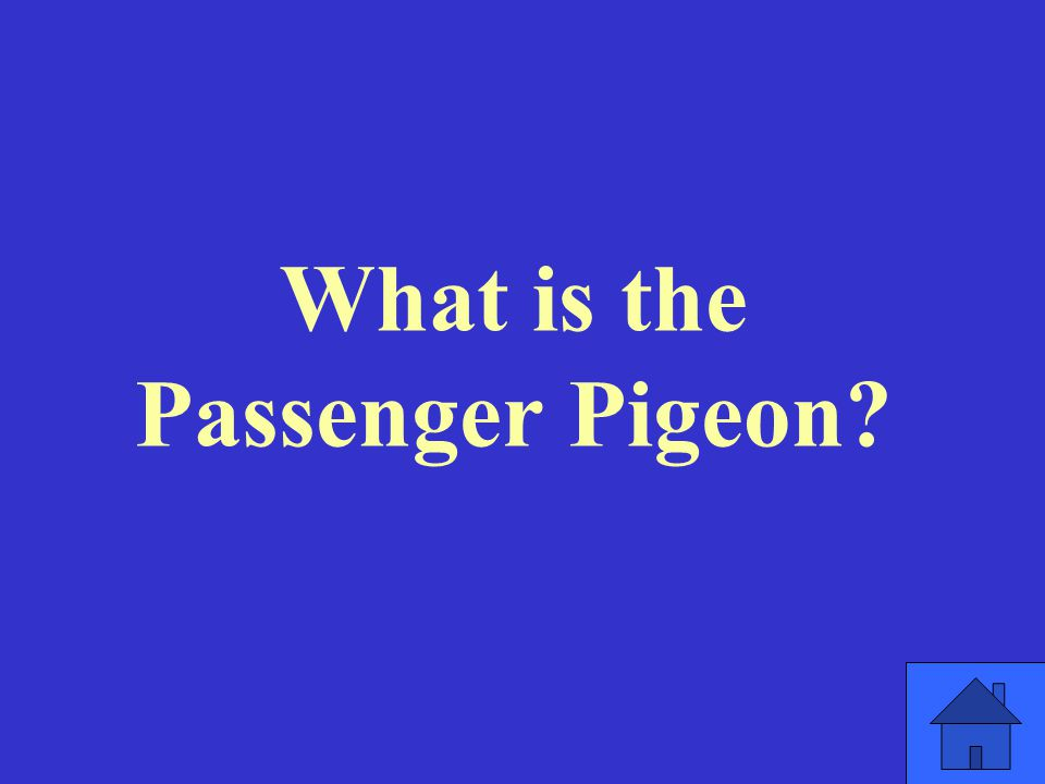 What is the Passenger Pigeon