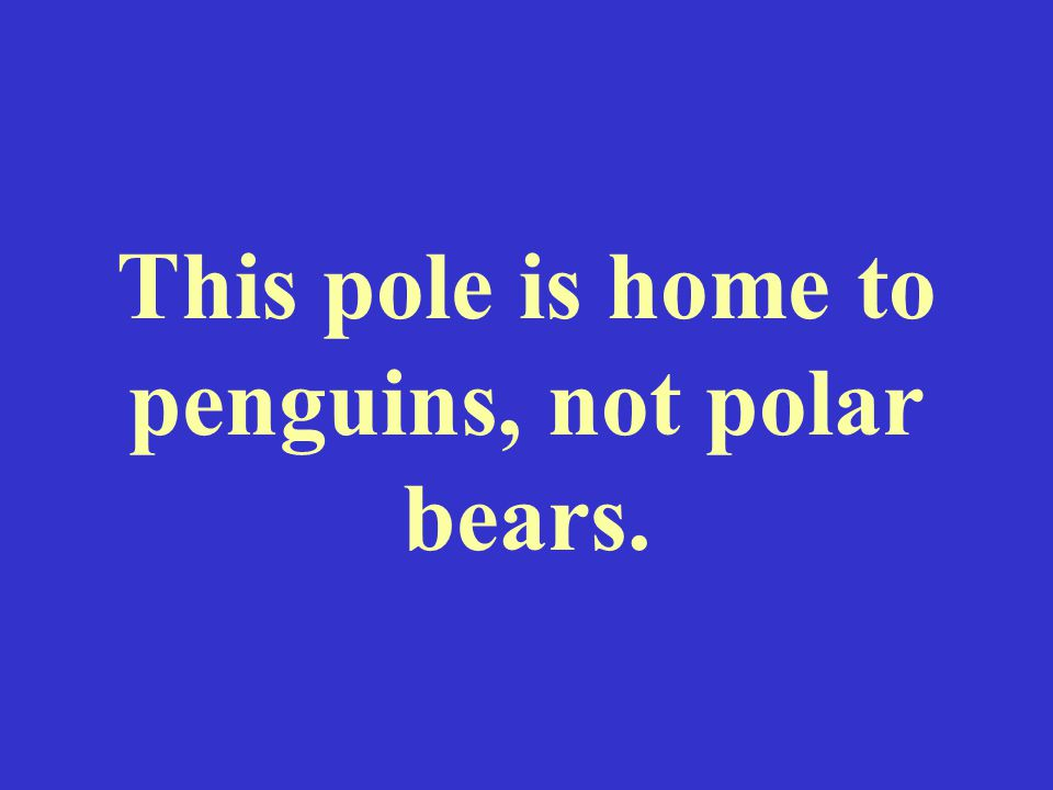 This pole is home to penguins, not polar bears.