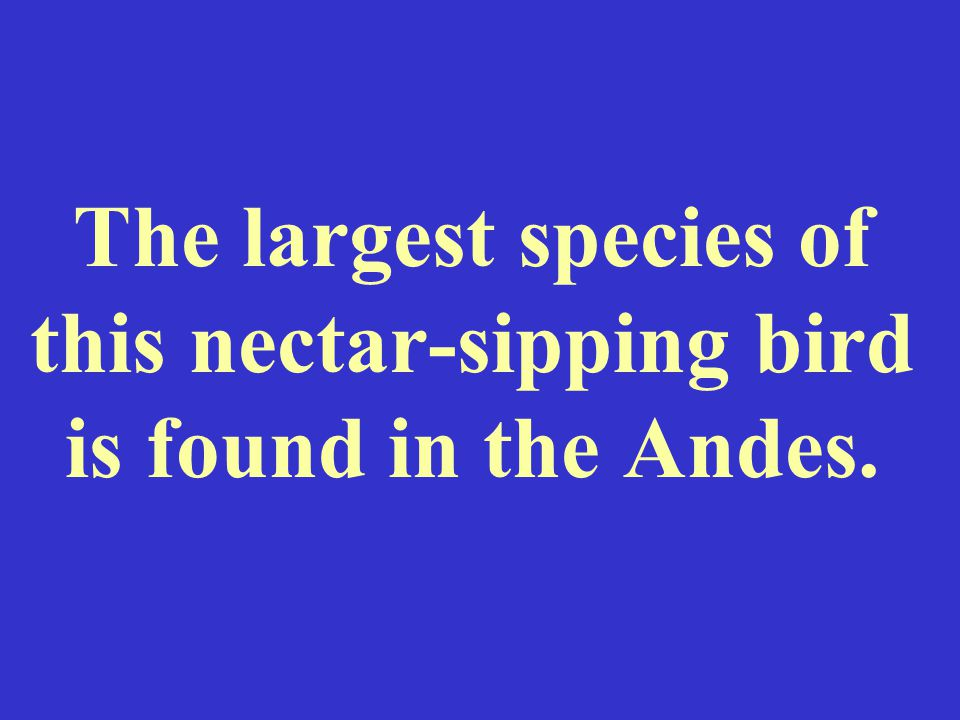 The largest species of this nectar-sipping bird is found in the Andes.