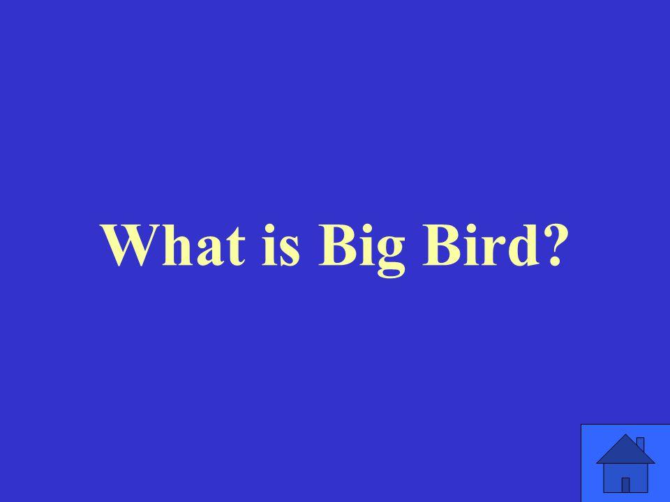 What is Big Bird