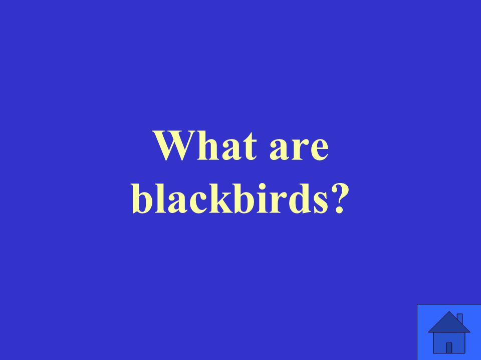 What are blackbirds