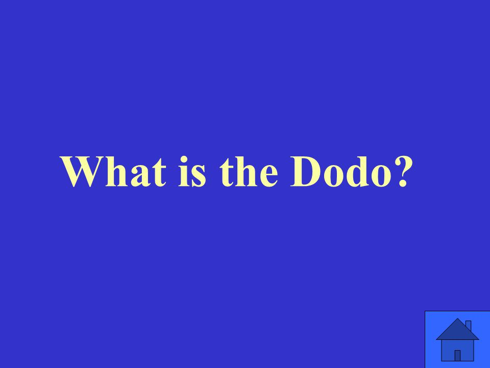 What is the Dodo