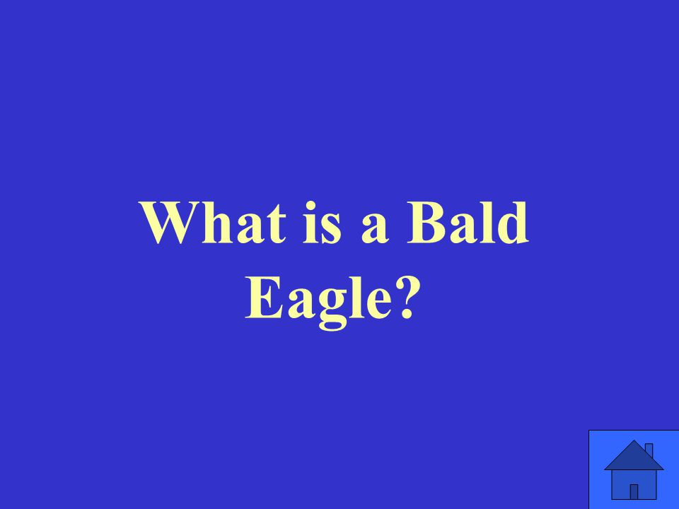 What is a Bald Eagle