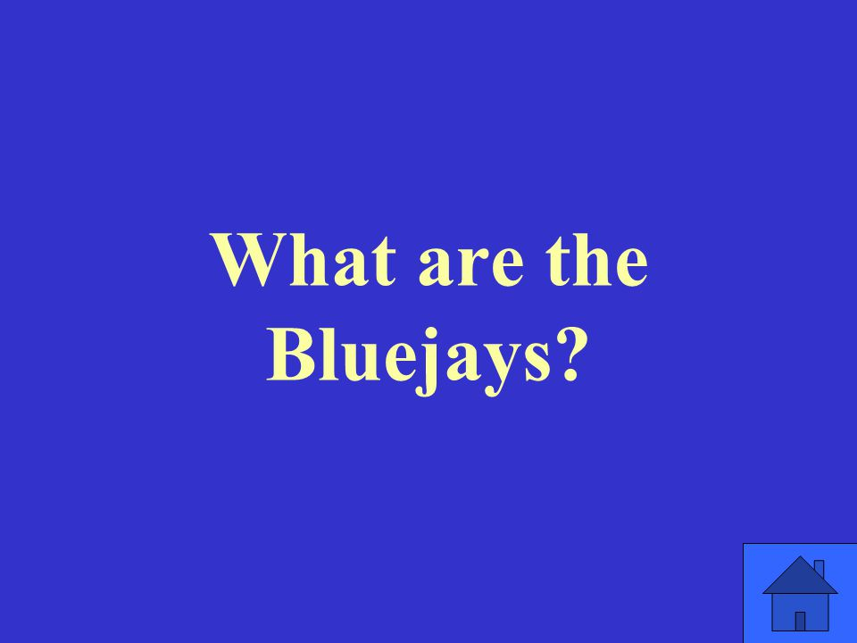 What are the Bluejays