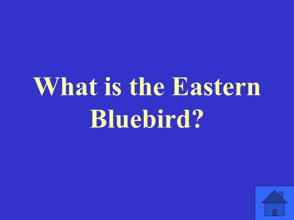 What is the Eastern Bluebird
