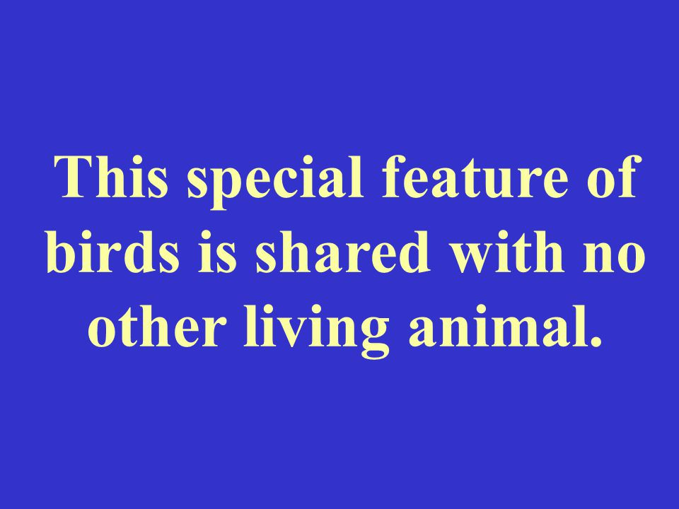 This special feature of birds is shared with no other living animal.