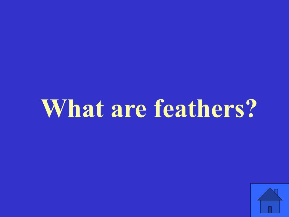 What are feathers