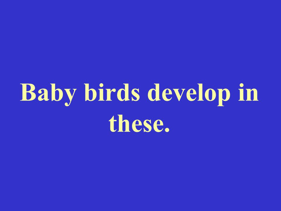 Baby birds develop in these.