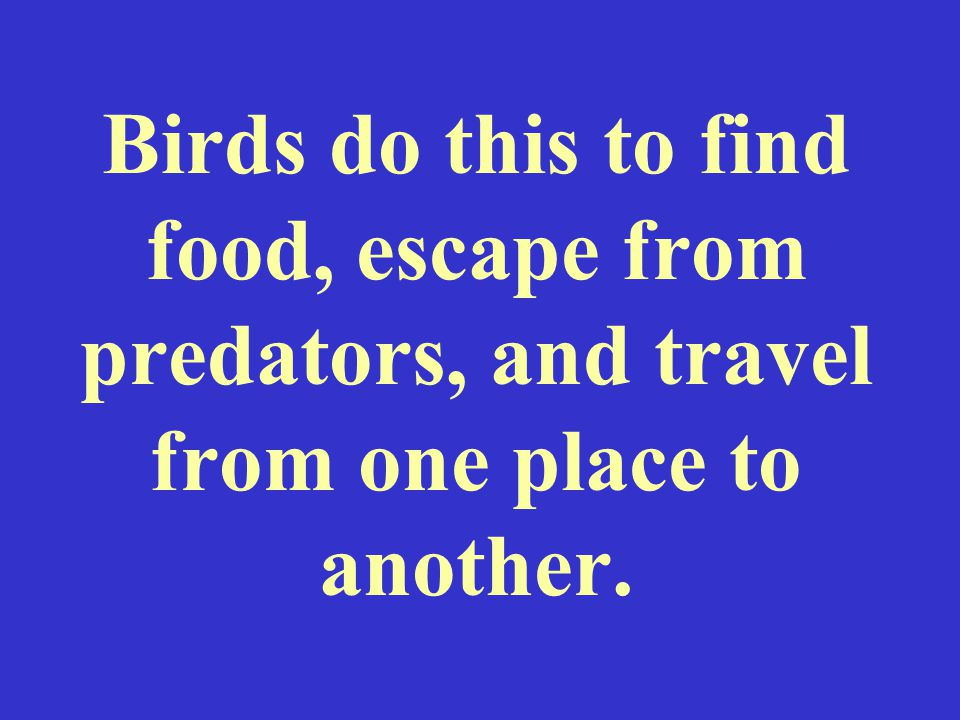 Birds do this to find food, escape from predators, and travel from one place to another.