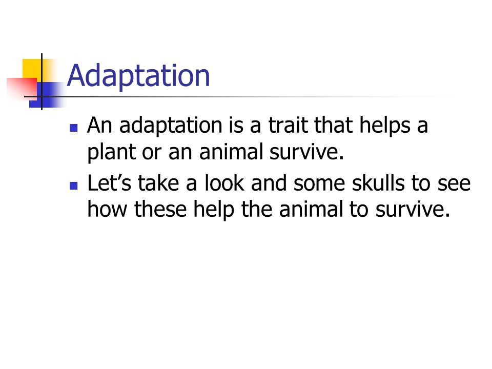 Adaptation An adaptation is a trait that helps a plant or an animal survive. Let's take a look and some skulls to see how these help the animal to sur