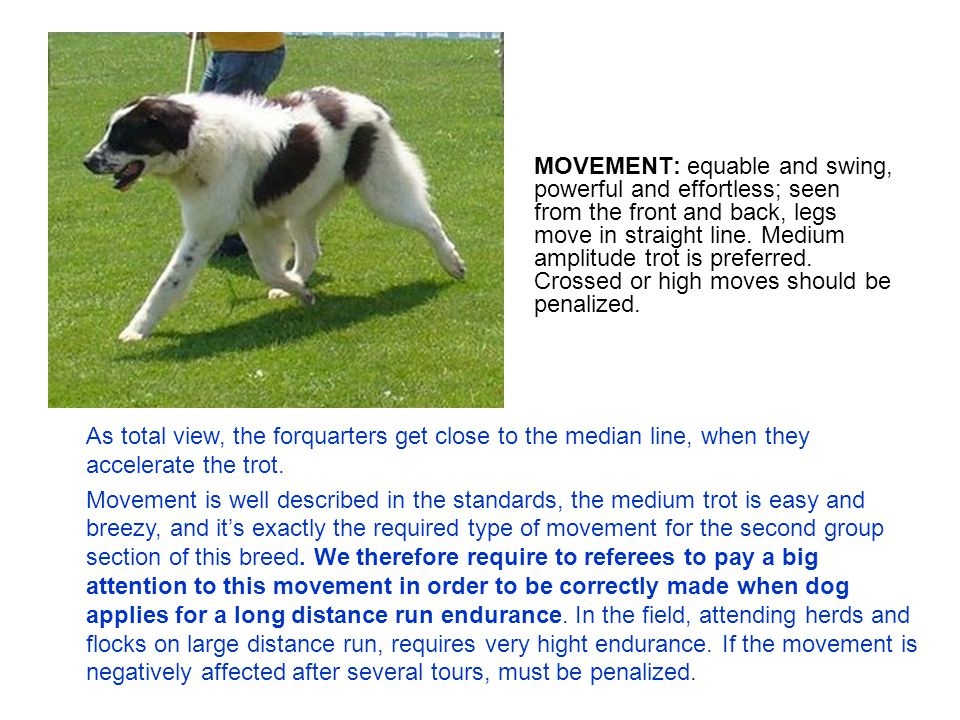 MOVEMENT: equable and swing, powerful and effortless; seen from the front and back, legs move in straight line.