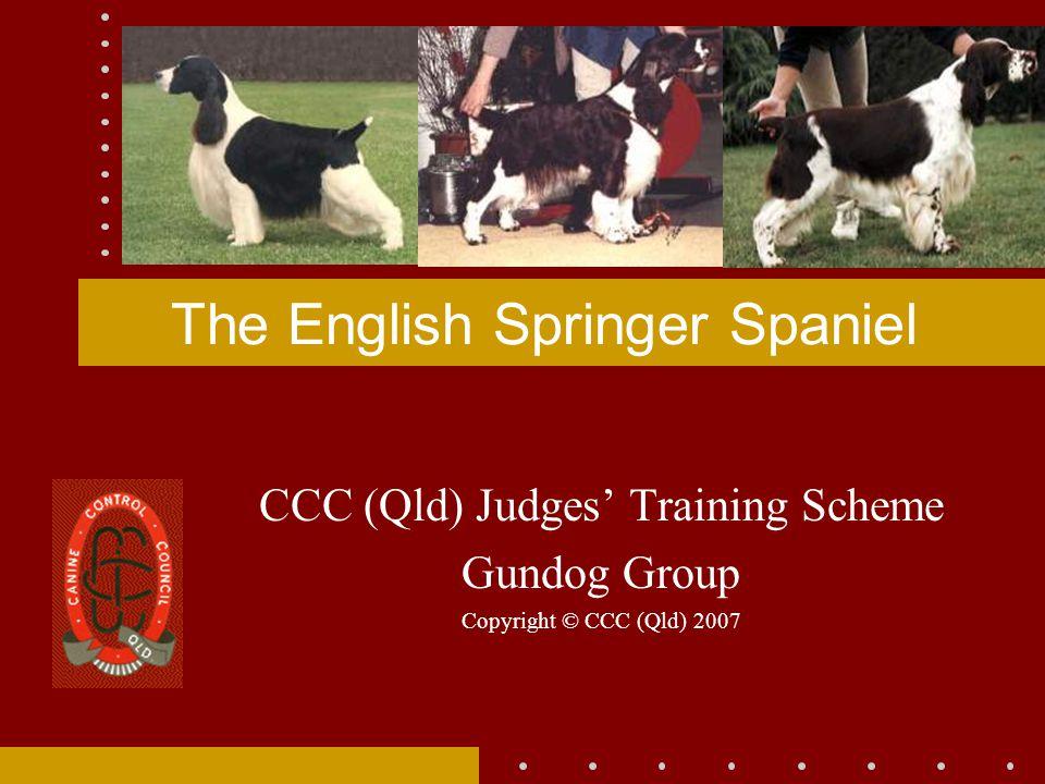 The English Springer Spaniel CCC (Qld) Judges' Training Scheme Gundog Group Copyright © CCC (Qld) 2007