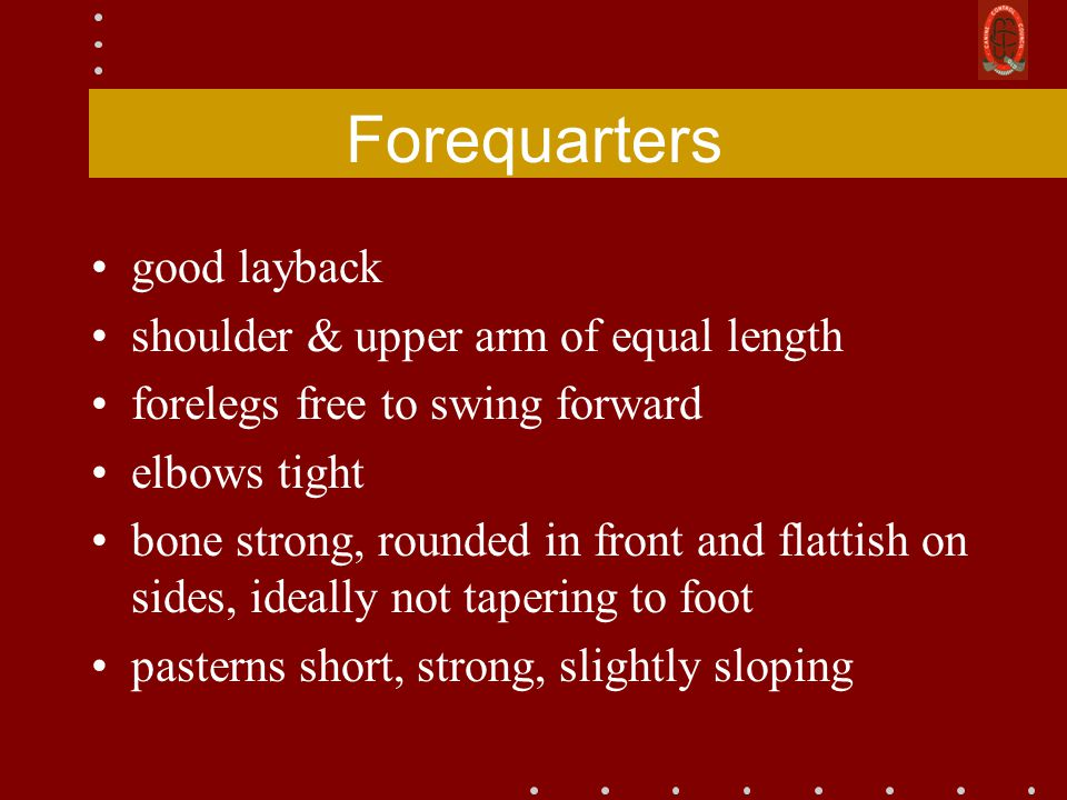 Forequarters good layback shoulder & upper arm of equal length forelegs free to swing forward elbows tight bone strong, rounded in front and flattish on sides, ideally not tapering to foot pasterns short, strong, slightly sloping