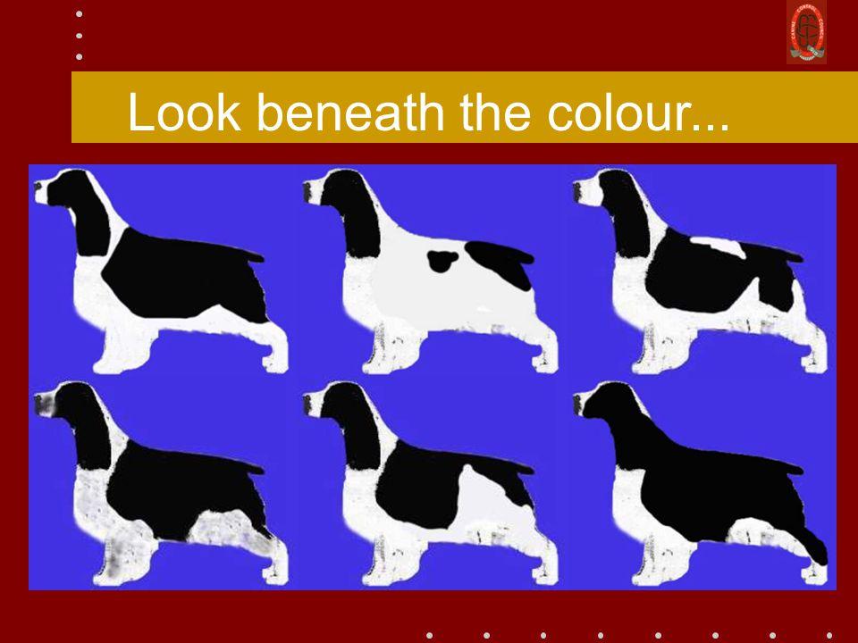 Look beneath the colour...