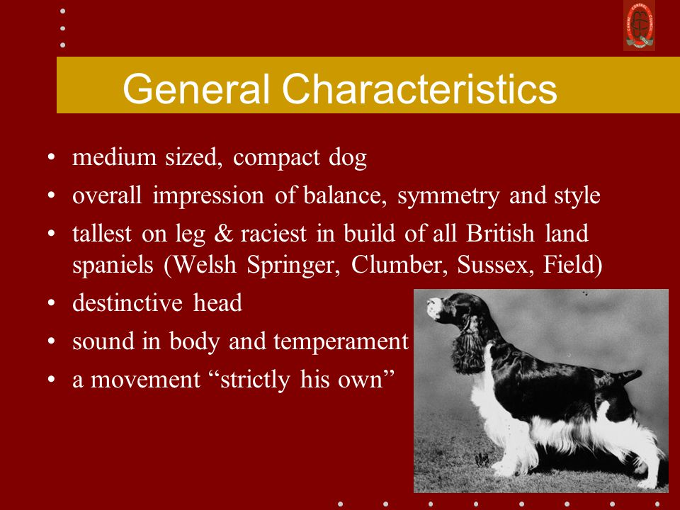 General Characteristics medium sized, compact dog overall impression of balance, symmetry and style tallest on leg & raciest in build of all British land spaniels (Welsh Springer, Clumber, Sussex, Field) destinctive head sound in body and temperament a movement strictly his own