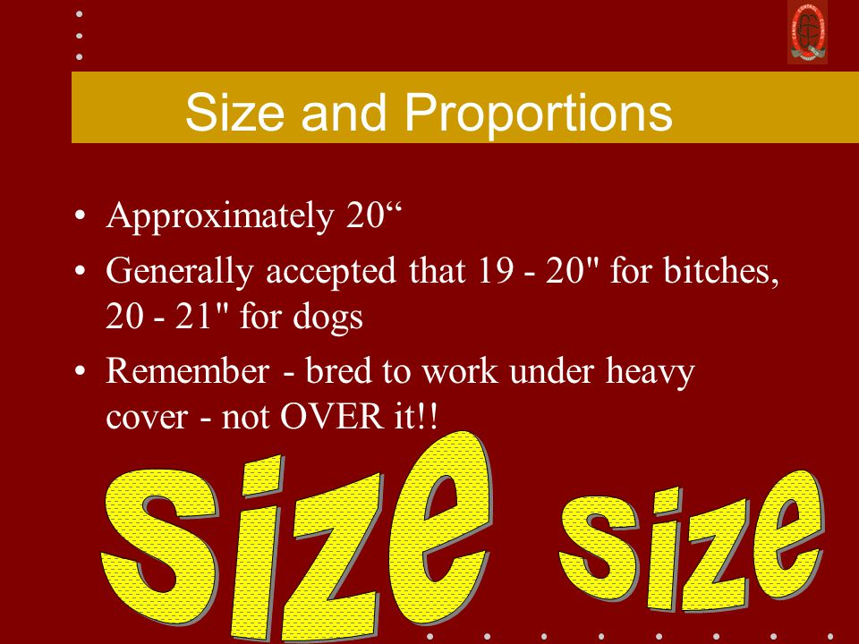 Size and Proportions Approximately 20 Generally accepted that 19 - 20 for bitches, 20 - 21 for dogs Remember - bred to work under heavy cover - not OVER it!!