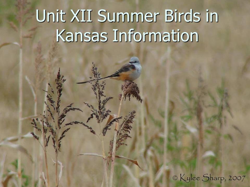 Unit XII Summer Birds in Kansas Information