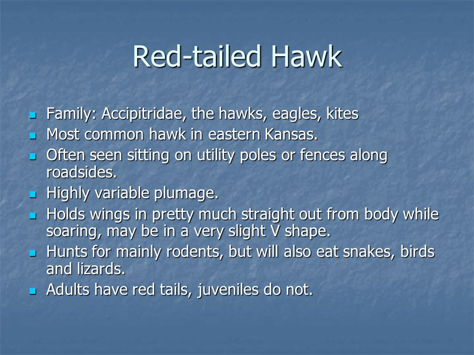 Family: Accipitridae, the hawks, eagles, kites Family: Accipitridae, the hawks, eagles, kites Most common hawk in eastern Kansas.